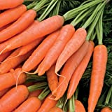 Search : Organic Danvers 126 Half Long Carrot 600 Seeds (Non-Gmo) Upc 646263362259 + 2 Plant Markers