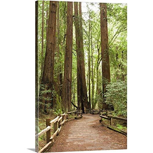 (California, Marin County, Muir Woods National Monument. Canvas Wall Art Print, 12