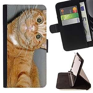 Momo Phone Case / Flip Funda de Cuero Case Cover - American Shorthair felino gato feliz; - Apple Iphone 6 PLUS 5.5