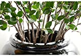 Htmeing Artificial Eucalytus Green Branches Faux