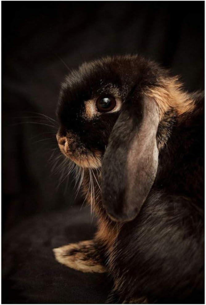 Cuadro en lienzo Pintura Conejo Conejito lindo Bosques Animales Foto y póster Arte de la pared del bebé Habitación para niños en blanco y negro 50x70 cm / 19.7