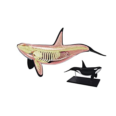 TEDCO 4D Orca Kids Educational Science Activity Kit: Toys & Games
