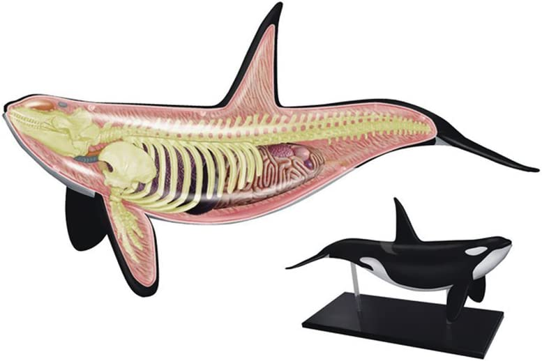 TEDCO 4D Orca Kids Educational Science Activity Kit