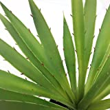17 Inch Succulent Yucca Plant with Decorative Modern White Pot Artificial Faux With Realistic Markings
