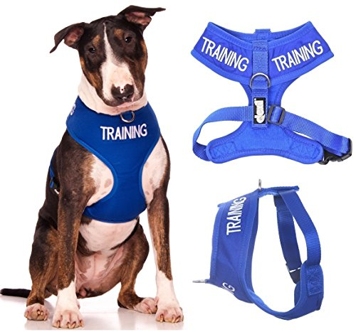 TRAINING (Dog In Training/Do Not Disturb) Blue Color Coded Non-Pull Front and Back D Ring Padded and Waterproof Vest Dog Harness PREVENTS Accidents By Warning Others Of Your Dog In (Dont Pull)