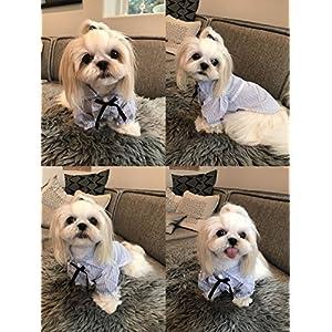 HappyDoggie Dog Shirts Lightweight Polo Tshirts Summer Clothes | Pet Puppy Stripe Clothing Blue Size XXL