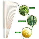 Ducking Mosquito Repellent Sticks, Natural Insect/Bug Repellent Incense Sticks - Eco friendly - Non toxic - Bamboo Infused with Lemongrass & grapefruit peel (50 Packs)