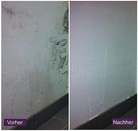 Antischimmel Wand Farbe