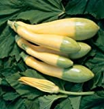 Legend Online Garden Seeds Squash Summer Zephyr D2217 (Yellow Green) 25 Hybrid Seeds