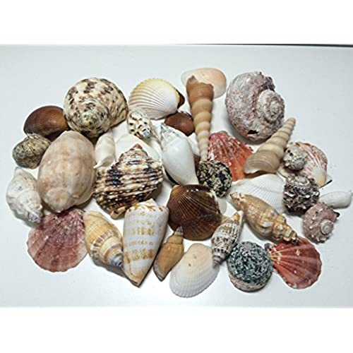 Decorative Vases With Shells Amazon