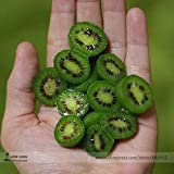 Heirloom Cocktail Miniature Kiwi Kiwiberry Berry Hardy Actinidia Arguta Fruit Seeds, Professional Pack, 30 Seeds / Pack E3336