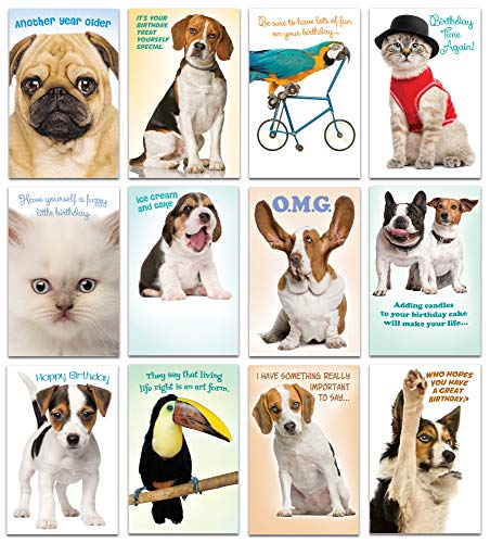 Prime Greetings 24 Funny Animal Birthday Card Assortment - Owl, Bengal Tiger, Parrot, Cat, Dog Birthday Card Box Set - Office Birthday Card Assortment Bulk - Bengals Card