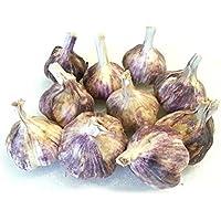 Knoblauchzwiebeln,violetter französischer Knoblauch, 10 Knoblauchzwiebeln mit frischem Knoblauch.