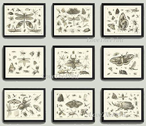 Art Print SET of 9 Beautiful Antique Dragonfly Butterfly Beetle Moth Spider Spring Summer Garden Insects Natural Science Illustration Home Room Wall Interior Decor Unframed FLS