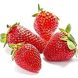 Indoor Strawberry kit