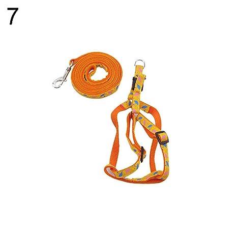 7b6501989f01 Amazon.com: angel3292 Clearance Deals!!Dog Cat Harness Collar Leash ...