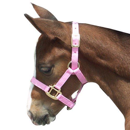 (Intrepid International Foal Halter,)