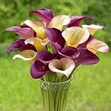 Calla Lilys - Ruby Sensation/Natural Bouquet Calla Lily Bulbs - 6/bag offers