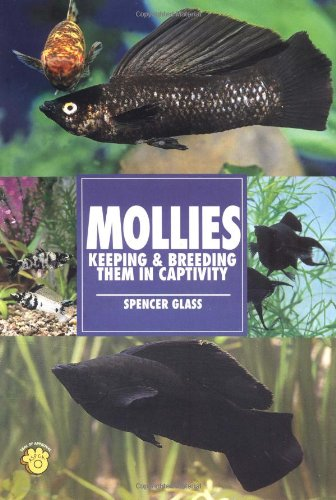 Mollies: Keeping & Breeding Them in Captivity