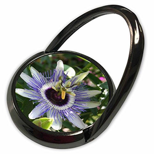 3dRose Taiche - Photography - Passion Flowers - Easters Thorn - passion flower, purple, nature, passiflora, wildflower of tennessee, christs thorn - Phone Ring (Passion Of Christ Flower)