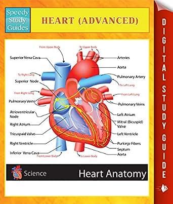 Study guide_exam 3(1) womens health - Study Guide for ...
