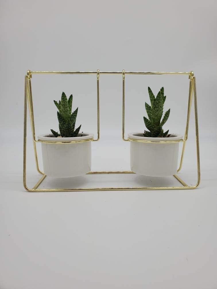 Decorative White Porcelain Plant Pots on a Gold Swing-Perfect for Succulents, Cactuses and Small Plants