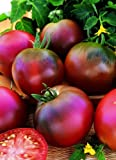 Just Seed Tomato - Black Russian - 100 Seed