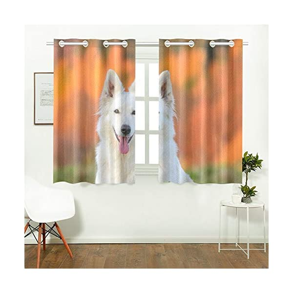AIKENING White Swiss Shepherd Dog Autumn Kitchen Curtains Window Curtain Tiers for Café, Bath, Laundry, Living Room Bedroom 26 X 39 Inch 2 Pieces 2