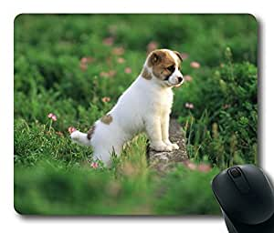 The Dog Concentrate His Attention on Grassland Rectangle mouse pad by Custom Service Your Best Choice