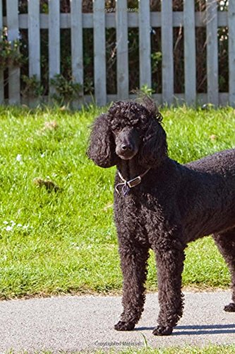 Download A Beautiful Black Poodle Outside on a Summer Day Dog Journal: 150 Page Lined Notebook/Diary pdf epub