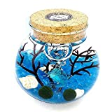OMEM Aquarium Kits-Living Moss Ball,Valentine gift Sea Fan, Gravel, Cone Seashell, Work Desk Decoration (Blue)
