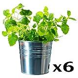 Ikea Socker, Galvanized Steel Flower Plant Pot Set of 6