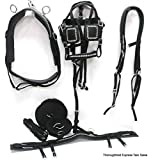 D.A. Brand Black Nylon Mini Pony Driving Harness w/Silver Spots Horse Tack