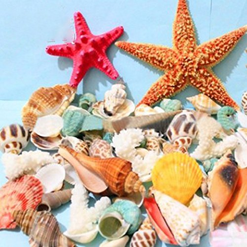 Sea Shells Mixed Beach Seashells- Natural Colorful Sea Shells Starfish Perfect for Candle Making,Home Decorations,Fish Tank and Vase Fillers,Beach Theme Party Wedding Decor, DIY Crafts (Mini Beach Natural Shells)