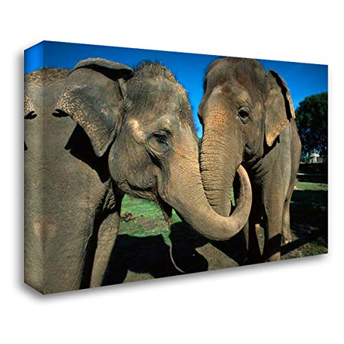 Asian Elephant Pair with Entwined Trunks, Native to India, Asia, Thailand and Laos 40x28 Gallery Wrapped Stretched Canvas Art by San Diego Zoo