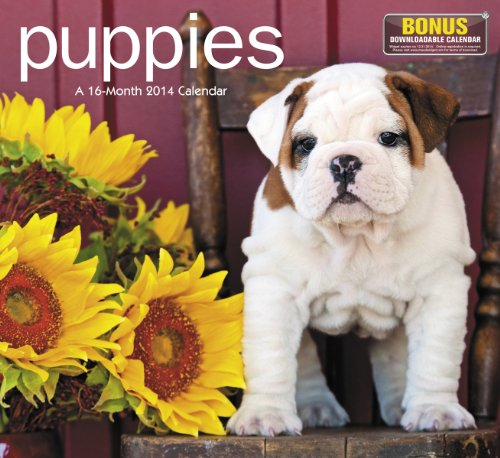 2014 Puppies Wall Calendar - Dogs 2014 Wall Calendar