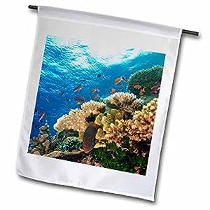 Danita Delimont - Fish - Fairy Basslet fish, Viti Levu, Fiji - OC01 SWS0011 - Stuart Westmorland - 18 x 27 inch Garden Flag (fl_84878_2)