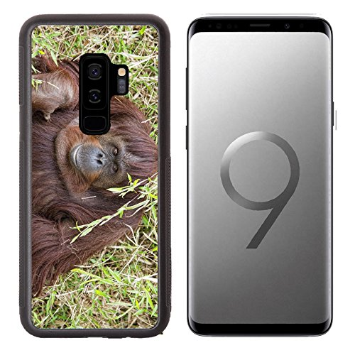 Luxlady Premium Samsung Galaxy S9 Plus Aluminum Backplate Bumper Snap Case Image Id  32011941 Orangutan Portrait While Looking At Yuo