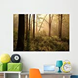 Wallmonkeys Spring Woods at Dawn Wall Decal Peel and Stick Graphic WM337792 (60 in W x 40 in H)