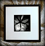 Discounted Limited Edition Fine Art Framed Photograph - Fallboard