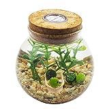 OMEM Aquarium Set - Lifestyle moss balls, seaweed, gravel, doll, boat workbench decoration (1 year old no lights, Small tortoise)