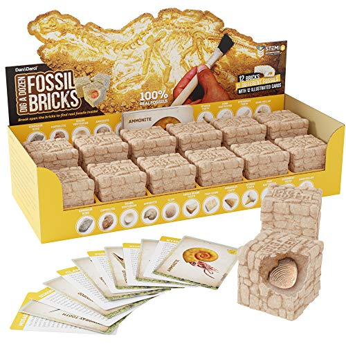 Dig a Dozen Fossil Bricks - Break Open 12 Bricks and Discover 12 Unique Real Fossils - Archaeology Science STEM Gift ()