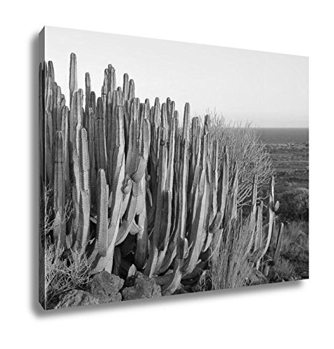 Ashley Canvas Succulent Plant Cactus On The Dry Desert, Home Office, Ready to Hang, Black/White 20x25, AG6553201 by Ashley Canvas