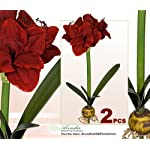 TWO-Artificial-24-Amaryllis-Bendable-Flowers-for-Christmas-Decoration