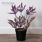 Bornbridge Artificial Marijuana Pot Leaf Plant
