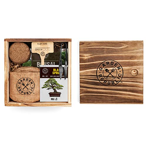Bonsai Tree Seed Starter Kit – Mini Bonsai Plant Growing Kit, 4 Types of Seeds, Potting Soil, Pots, Pruning Shears…