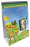 NewPath Learning 10 Piece All About Plants Curriculum Mastery Flip Chart Set, Grade 5-10