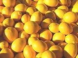 Organic Lemons - 10-12 Lb Case