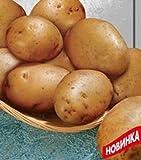 buy Rare Ukrainian Organic Vegetable True Potato seeds