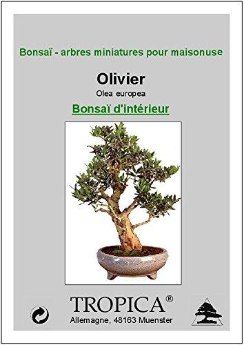 Tropica – Olivenbaum (Olivenöl,) – 20 graines- Bonsai: Amazon.de: Garten